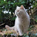 Sammy im Garten