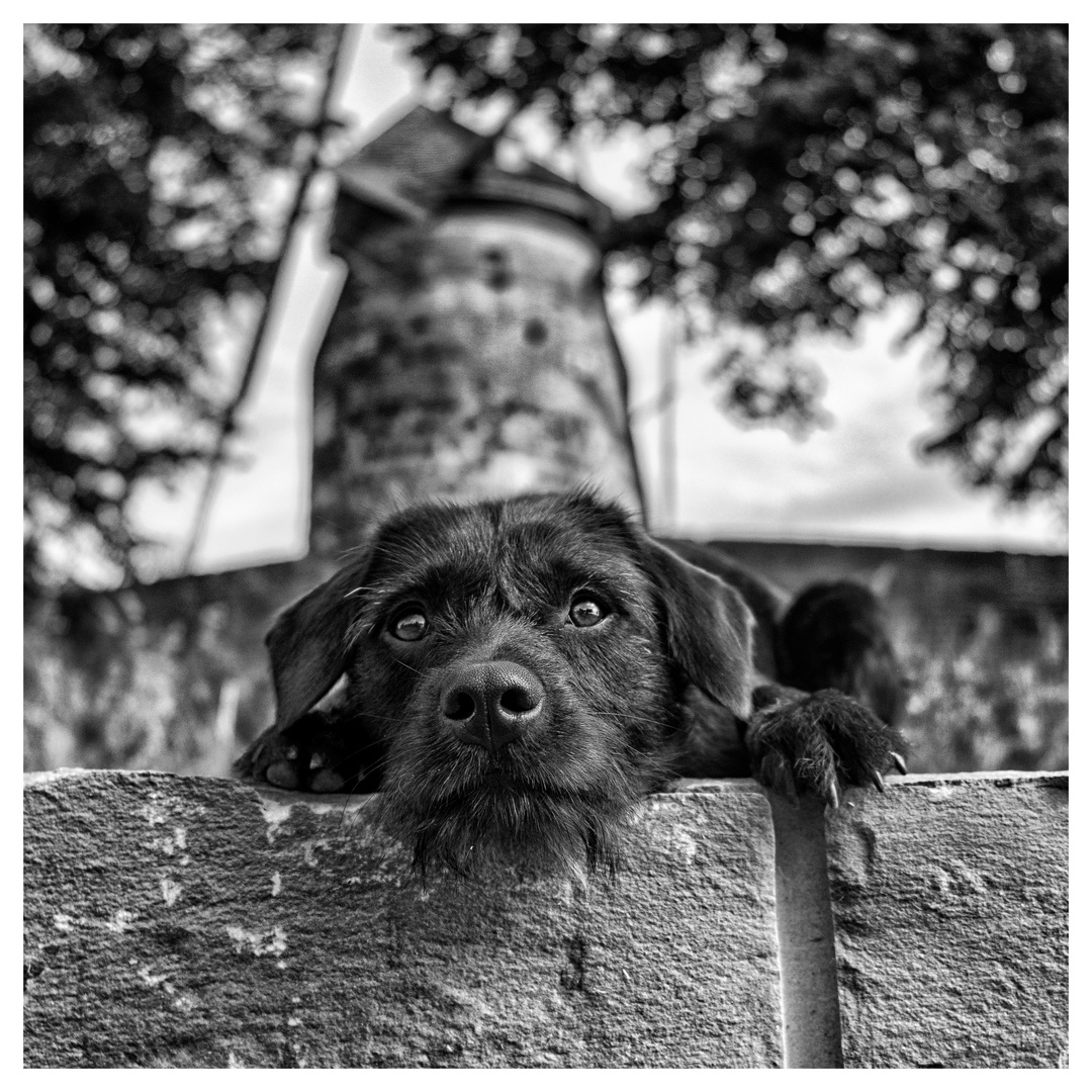 Sammy und die Windmühle