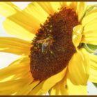 Samstag Blühpflanzenbesucher am 25.09.21