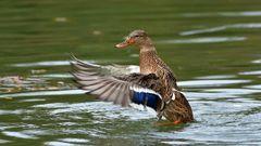 Samstag sei Badetag sagte die Ente