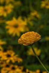 Samstagsblümchen