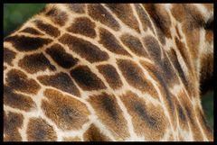 San Diego Zoo III
