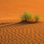 Sand im Bild (mit Gras)