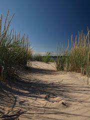 Sand und Strauch