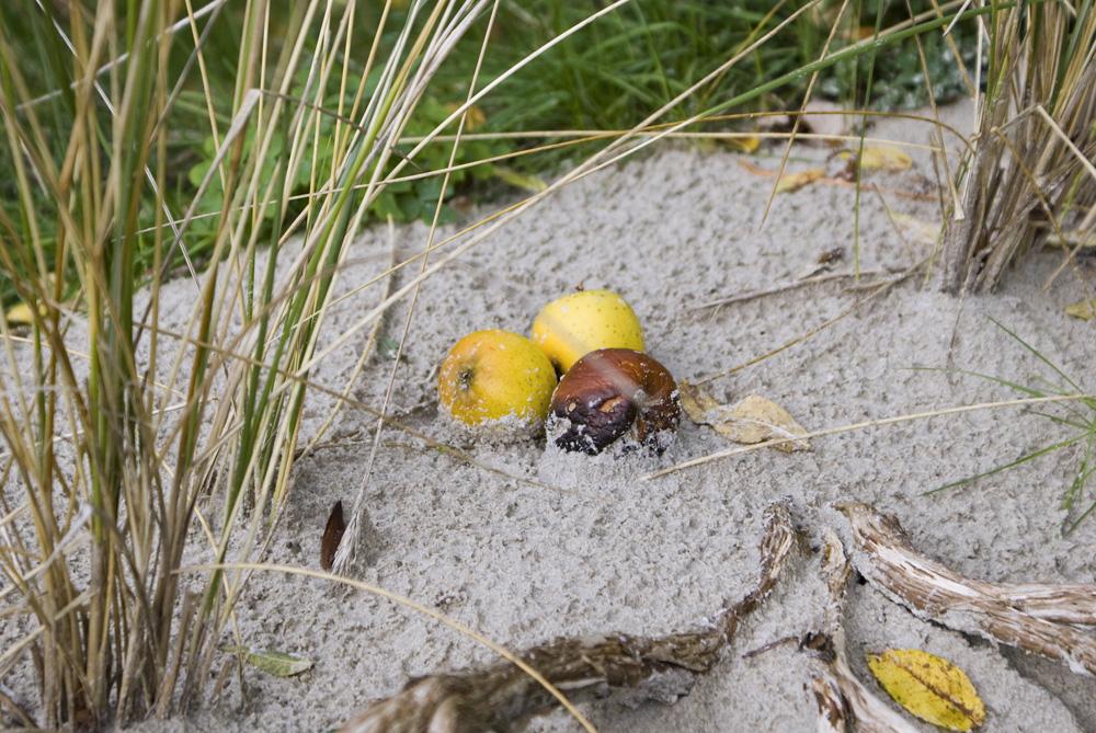 Sandäpfel