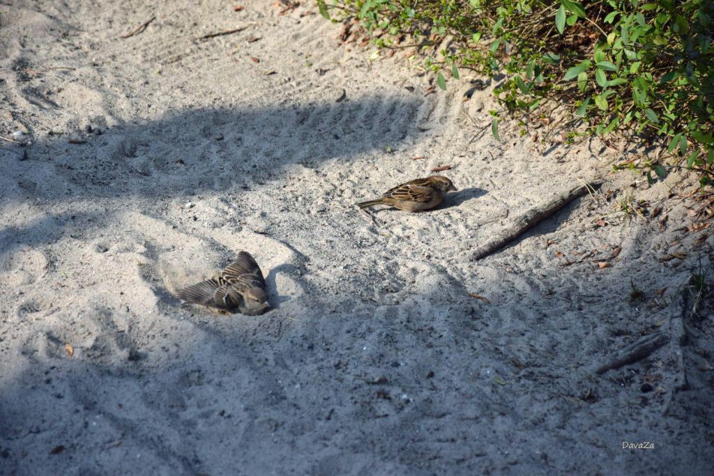 Sandbad2
