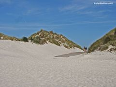 Sanddüne auf der Insel Amrum