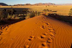 Sanddüne - Namibia