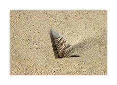 < Sandfeder >