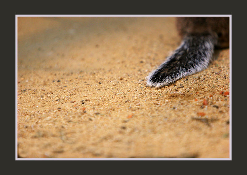 Sandmännchen