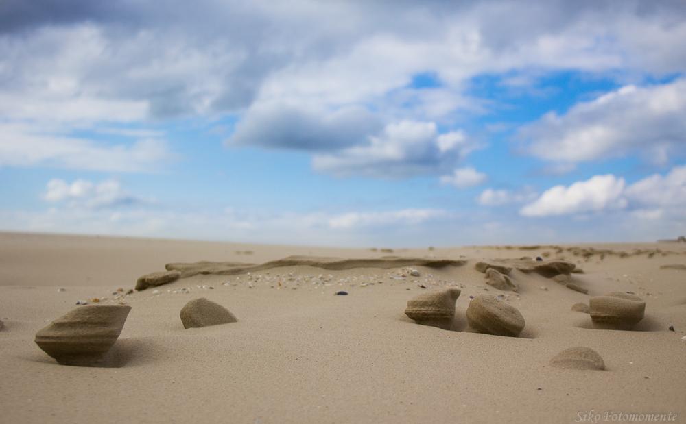 Sandpilze