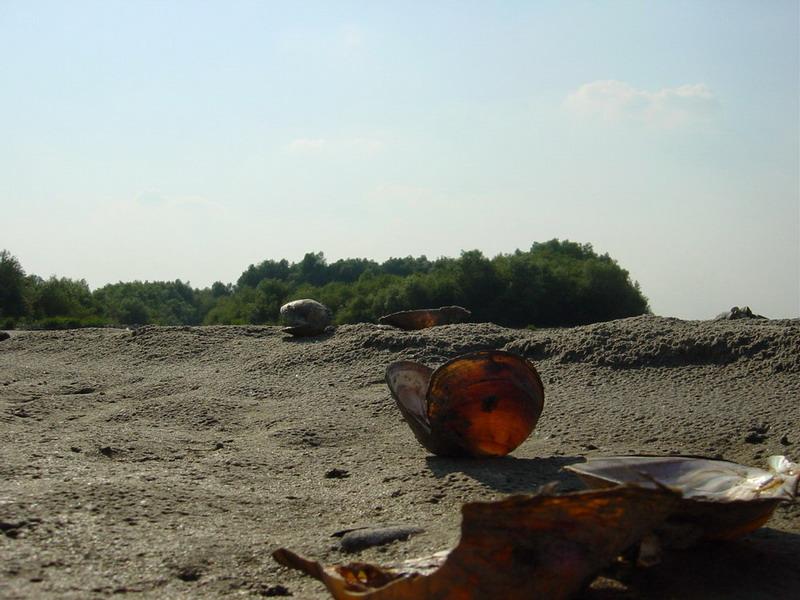 Sands of Danube