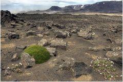 * sandstorm * . . Iceland 05