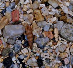 Sandstrand 1