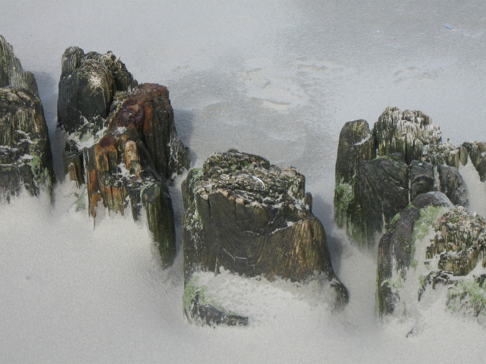 Sandwirbel Nordsee