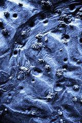 Sandwürmer