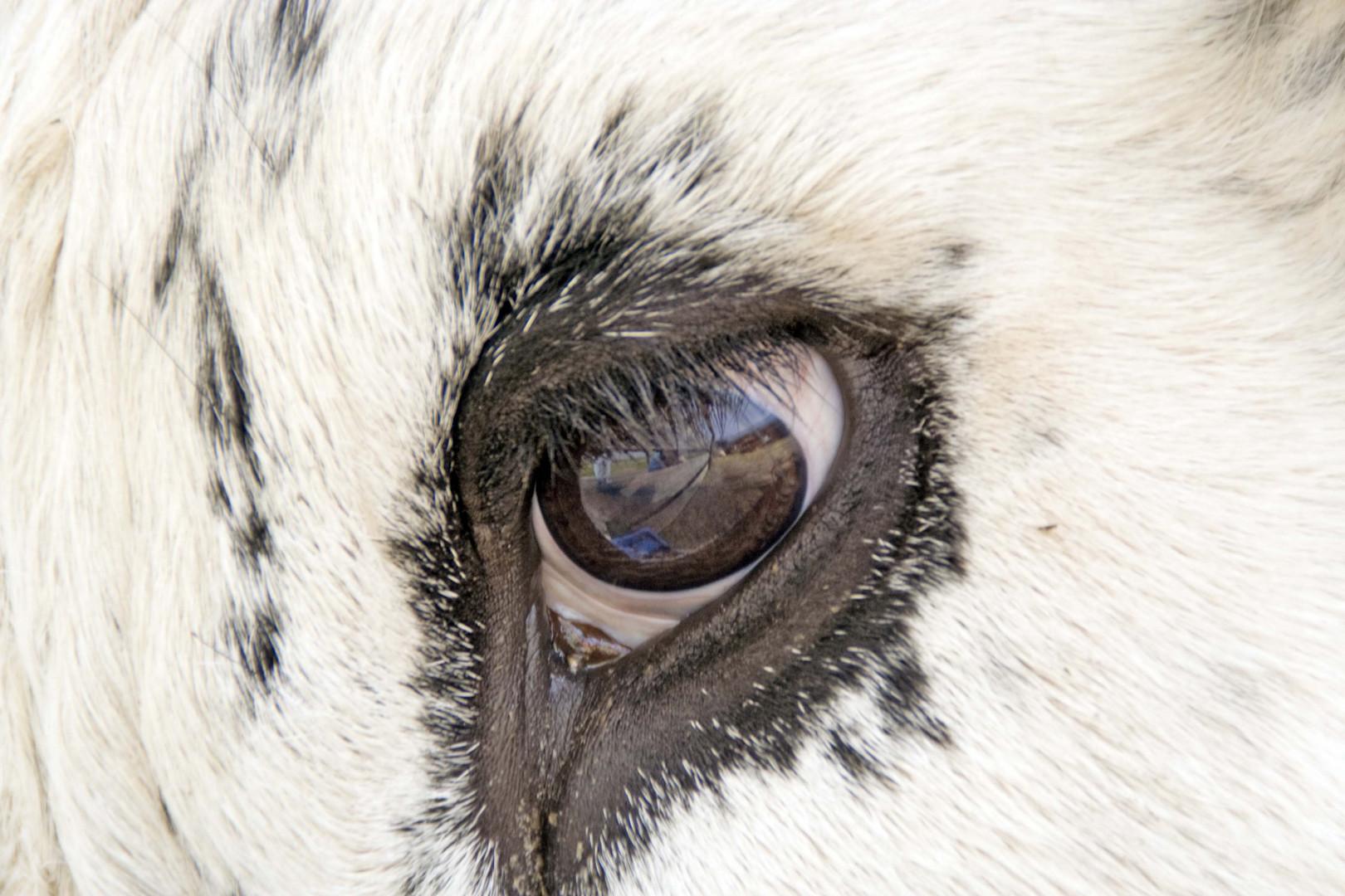 Sanfte Augen auf Gut Aiderbichl - 1