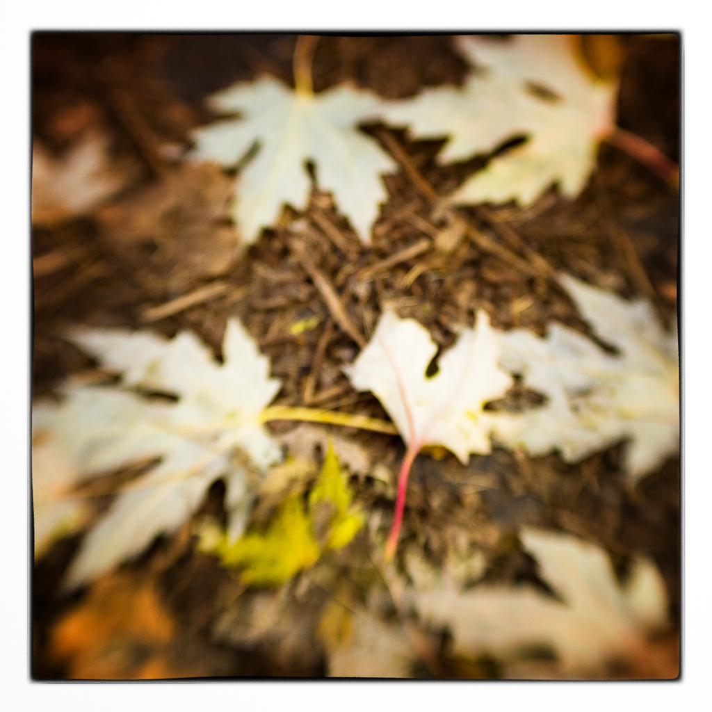 Sanfte Blätter