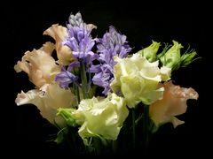Sanfte Blütenpracht ...