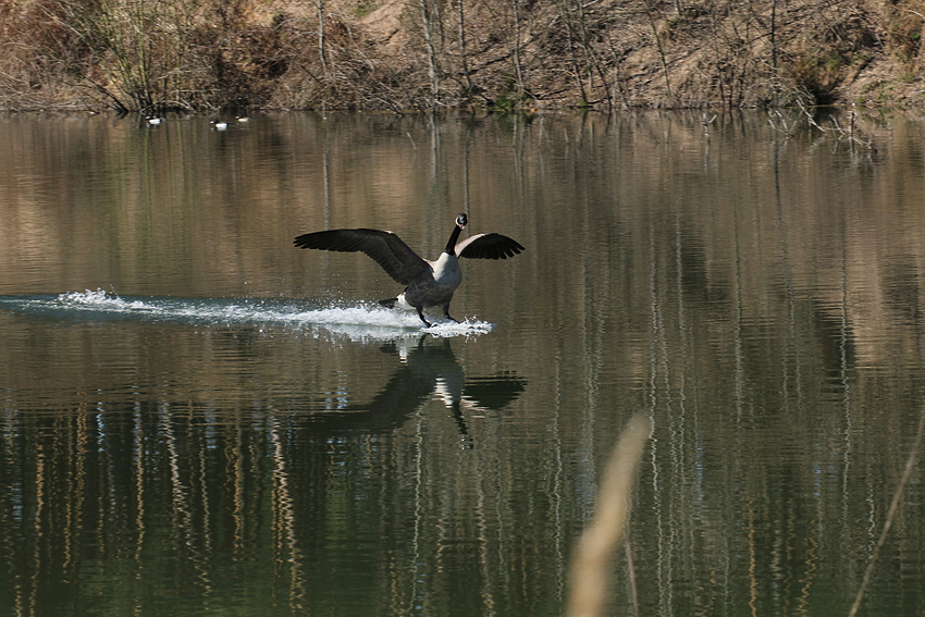 Sanfte Landung
