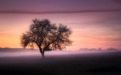 Sanfte Nebelschleier