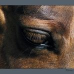 Sanftes Auge
