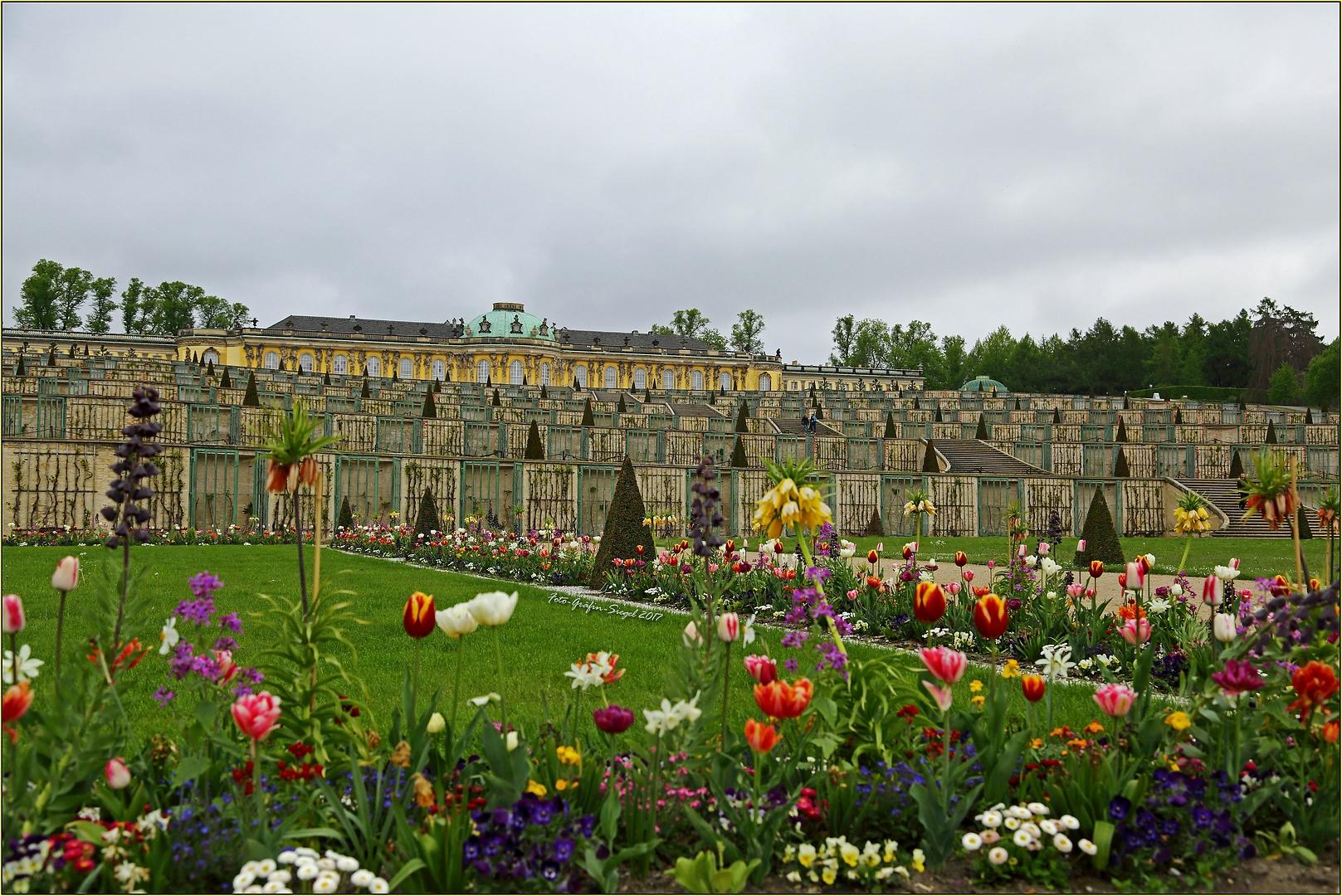 Sanssouci im Frühling ...