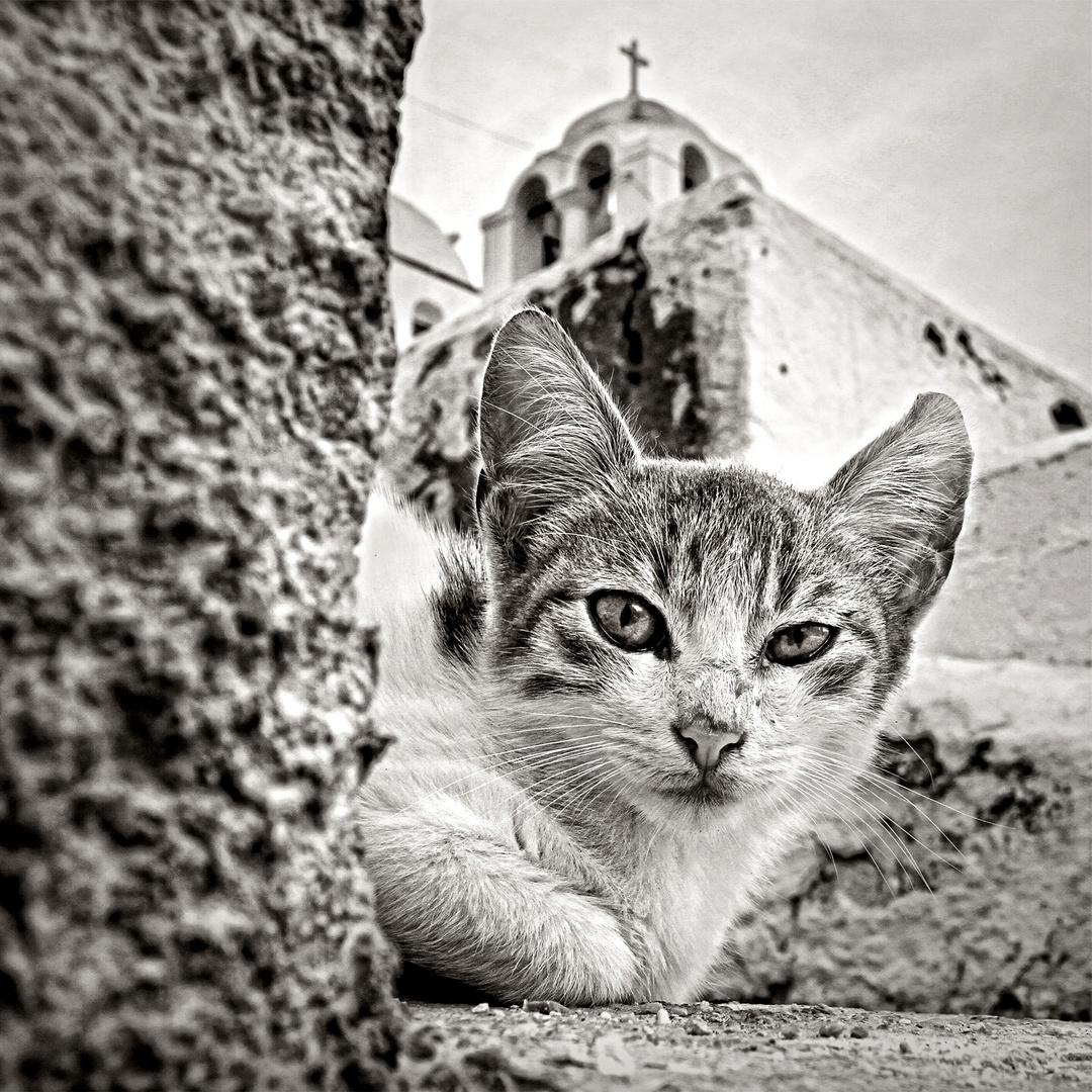 SANTORINI CAT 1