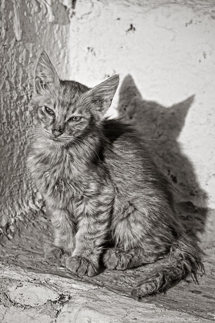 SANTORINI CAT 2