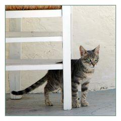 Santorini Cat 2009