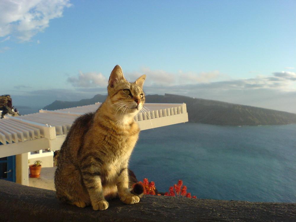 Santorini Cat Gaze