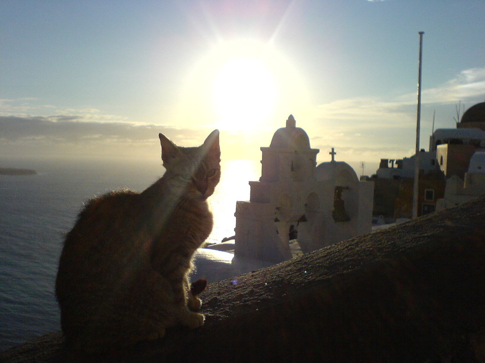 Santorini Cat Moment