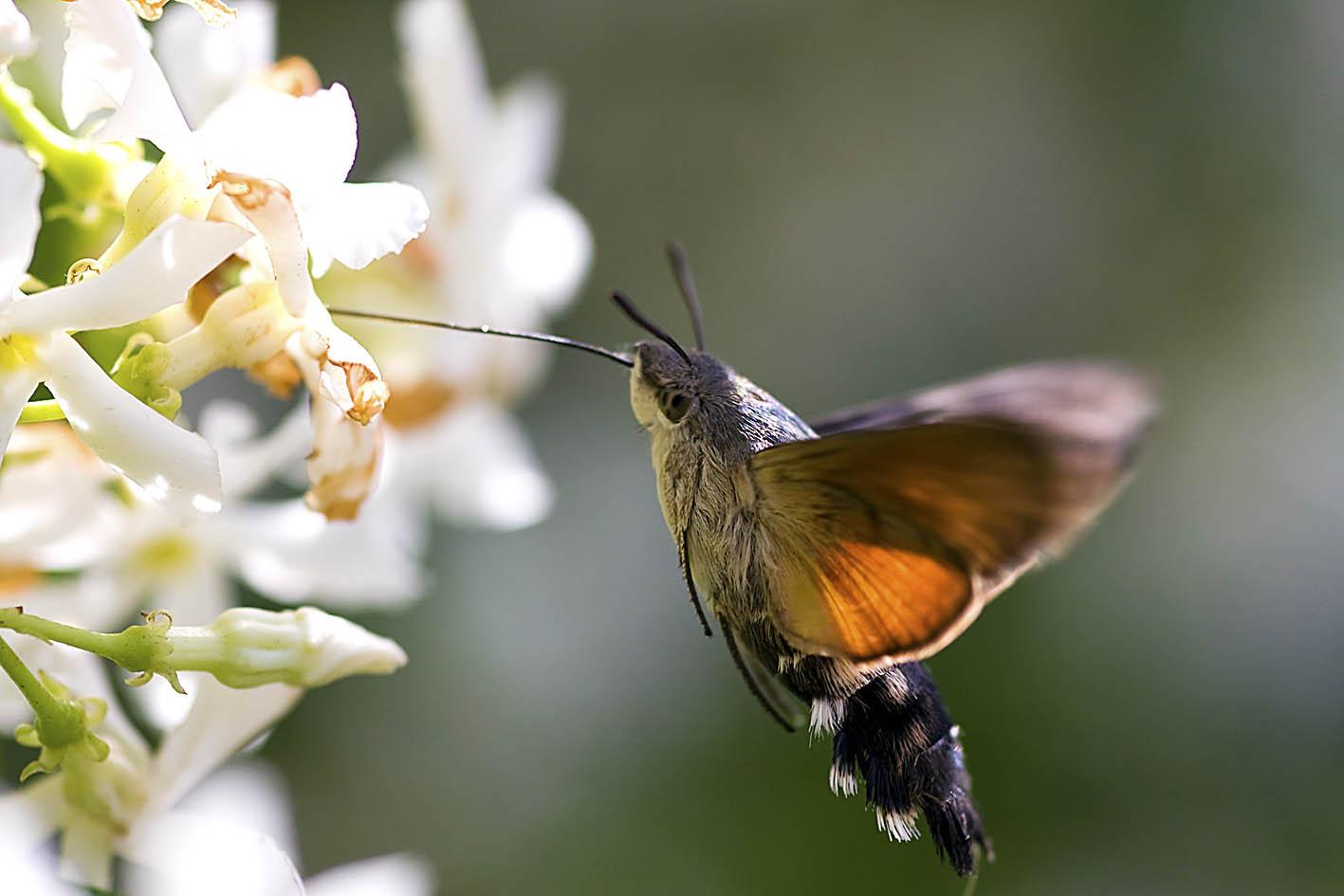 Sardegna Natura Numero 2