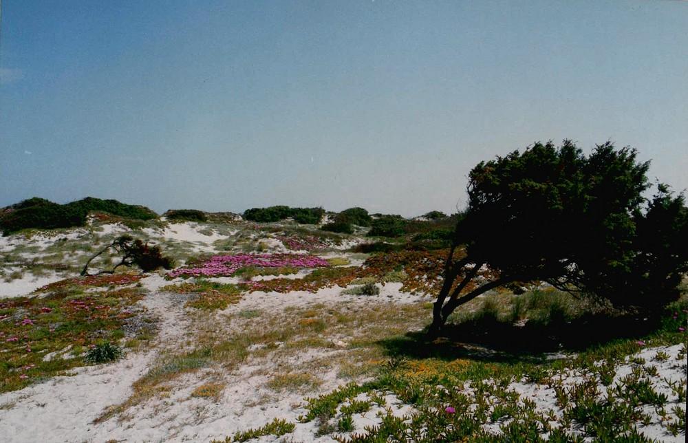 Sardegna settentrionale - Badesi - Primavera sulle dune