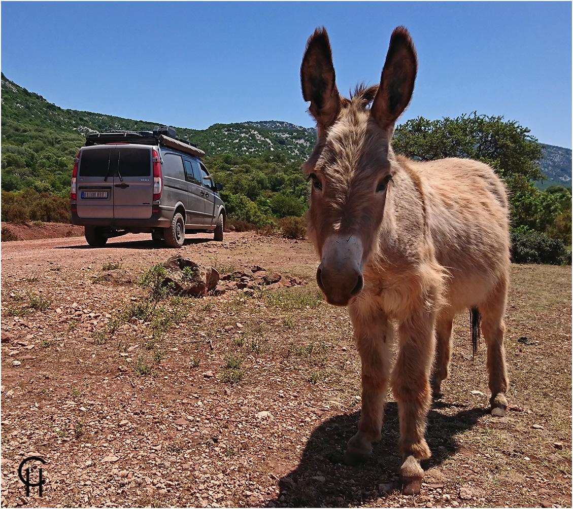 Sardinien - Unterwegs auf Eselspfaden