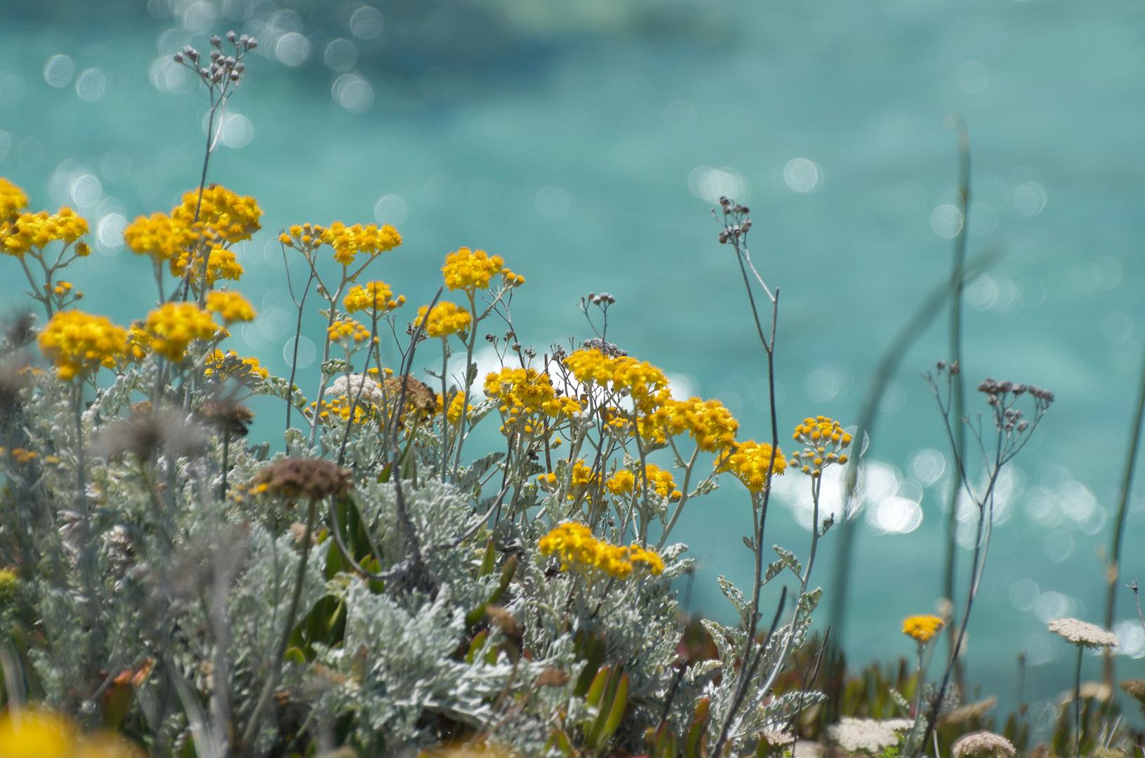 - Sardischer Küstentraum -