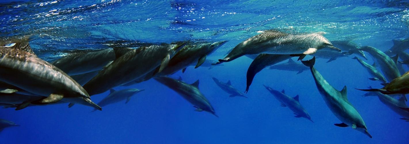 "Sataya Riff - ""Dolphin House"""