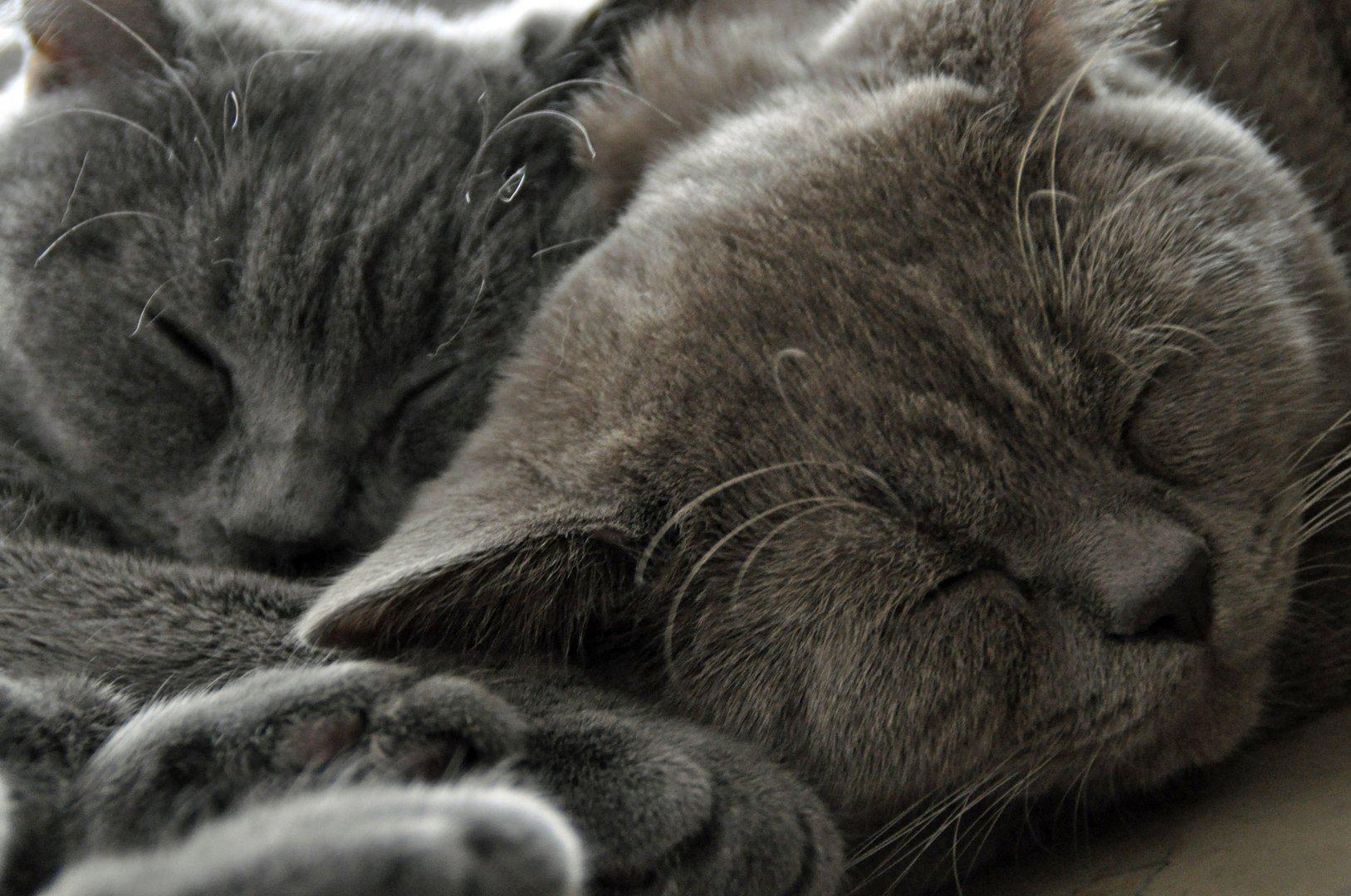 - satt - faul - müde -