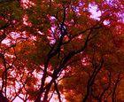 Satured Tree