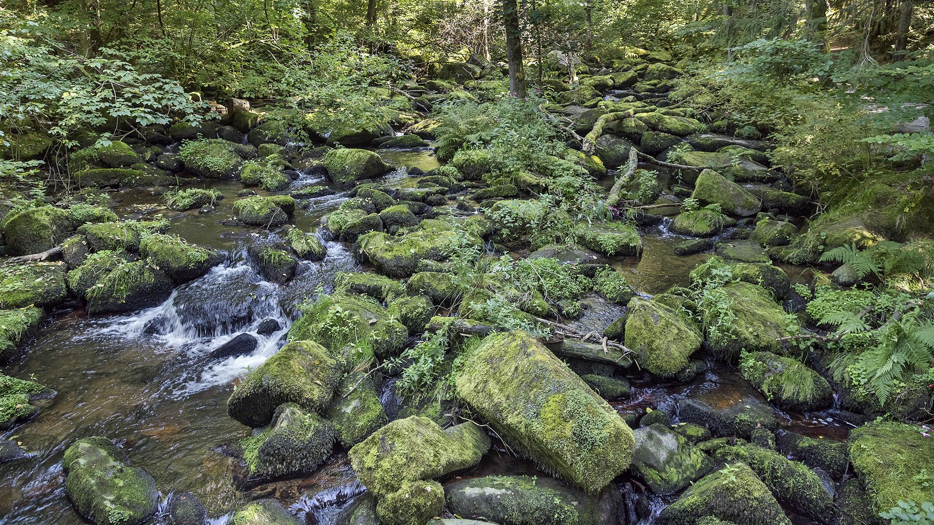 SAUSSBACHKLAMM - Bayerischer Wald  (2)