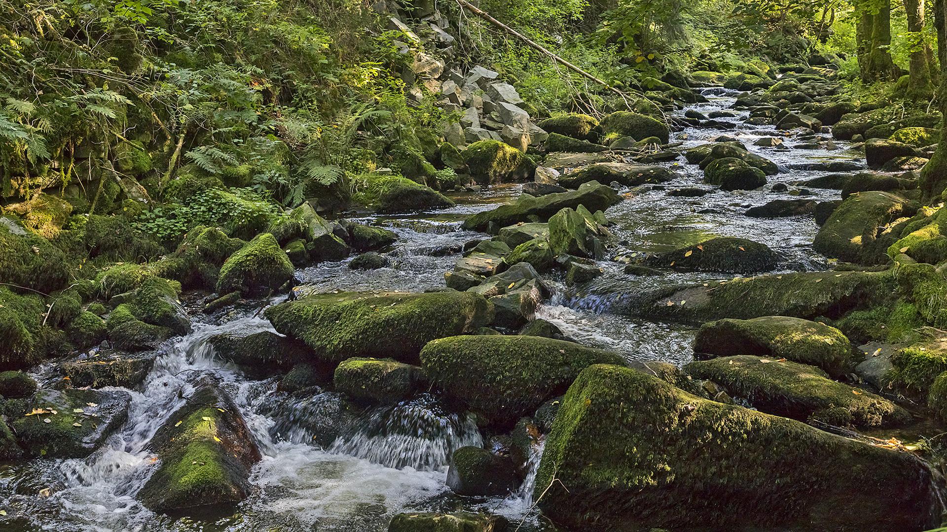 SAUSSBACHKLAMM - Bayerischer Wald