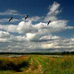 Savanna Wetlands