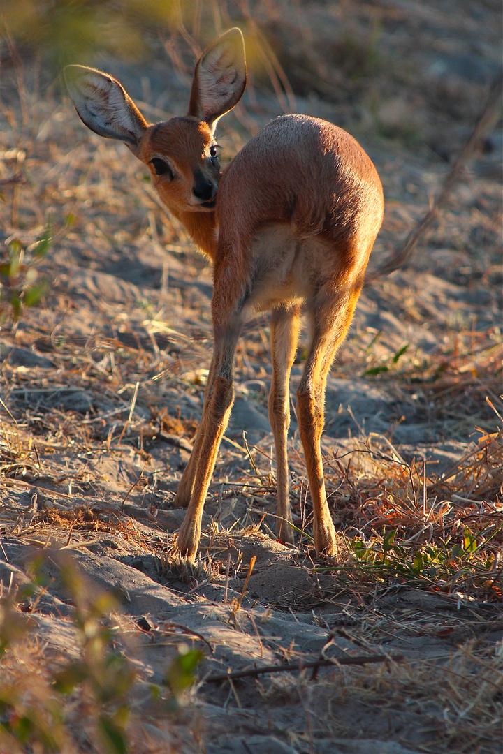 Savute, Chobe National Park, Botswana