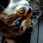 Saxo My Cat ! :)