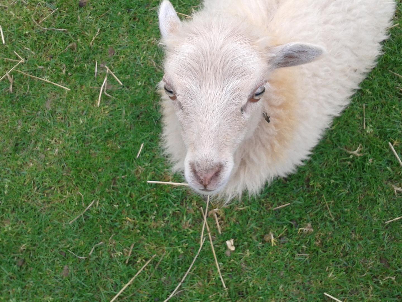 Say Sheep!