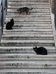 Scala / Treppe / Staircase