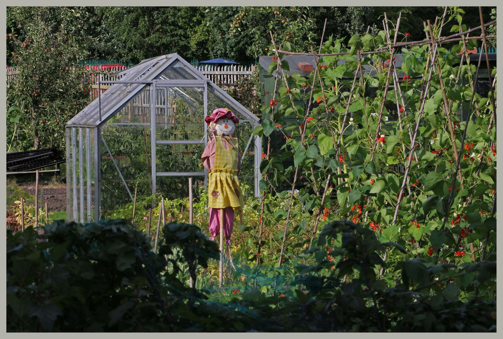scarecrow 4 north jesmond allotments