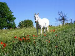 Scarlett, meine Pferdefreundin