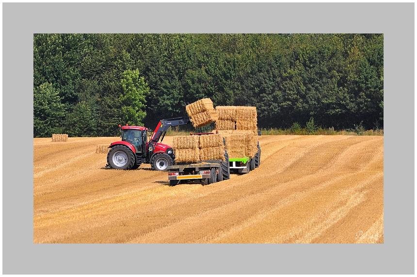 Scène agricole !