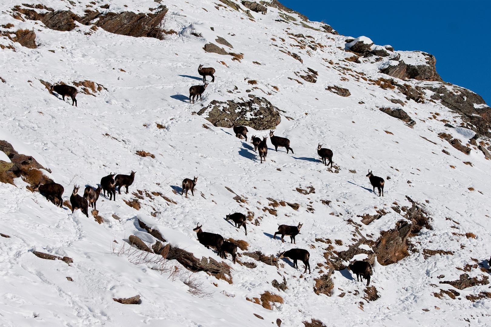 Scene di montagna di dicembre